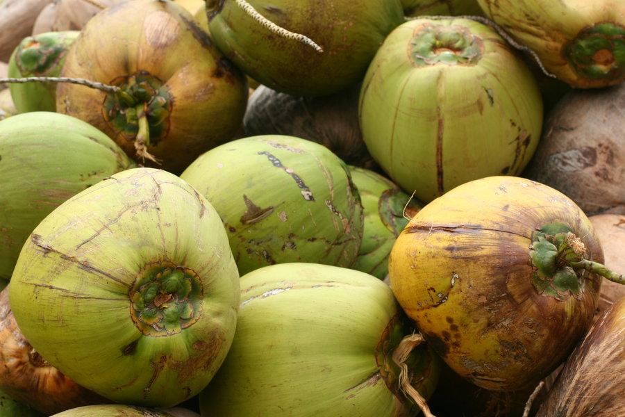 Koh Samui coconut